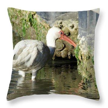 White Ibis Headed Home Throw Pillow