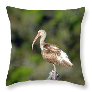 White Ibis In Jekyll Island Marsh Throw Pillow by Bruce Gourley