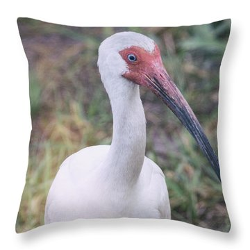 White Ibis In The Morning Light  Throw Pillow by Saija  Lehtonen