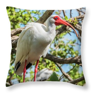 Throw Pillow featuring the photograph White Ibis In Tree by Bob Slitzan