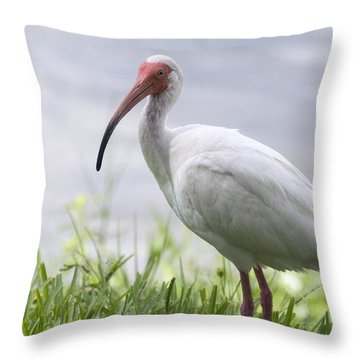 White Ibis  Throw Pillow by Saija  Lehtonen