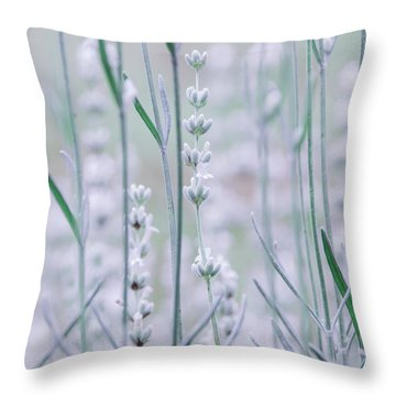 Throw Pillow featuring the photograph White Lavender  by Andrea Anderegg