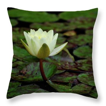 White Lily In The Pond Throw Pillow