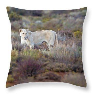 White Lioness Throw Pillow