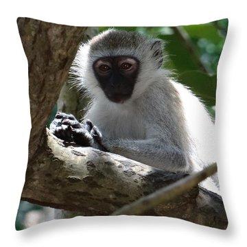 White Monkey In A Tree 4 Throw Pillow