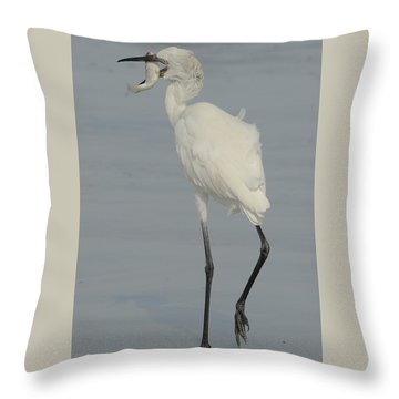 White Morph Reddish Egret  With Mullet Throw Pillow