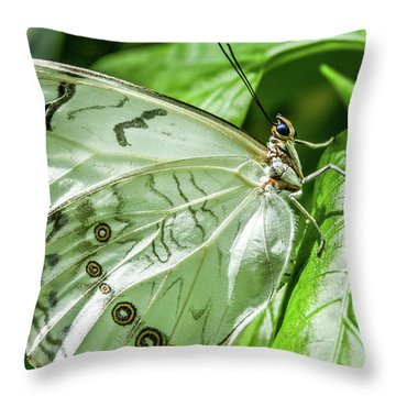 Throw Pillow featuring the photograph White Morpho Butterfly by Joann Copeland-Paul