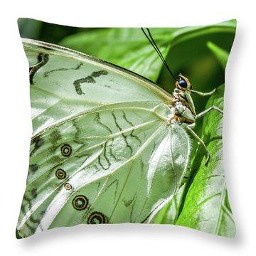 White Morpho Butterfly Throw Pillow by Joann Copeland-Paul