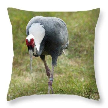 White-naped Crane Throw Pillow