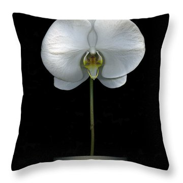 White Orchid In A Pot Throw Pillow by Christian Slanec