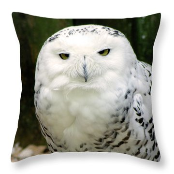 White Owl Throw Pillow by Rainer Kersten
