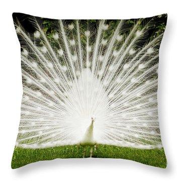 White Peacock  Throw Pillow by Dustin K Ryan