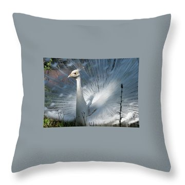White Peacock Throw Pillow by Lamarre Labadie