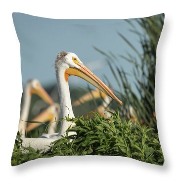 Throw Pillow featuring the photograph White Pelican 7-2015 by Thomas Young
