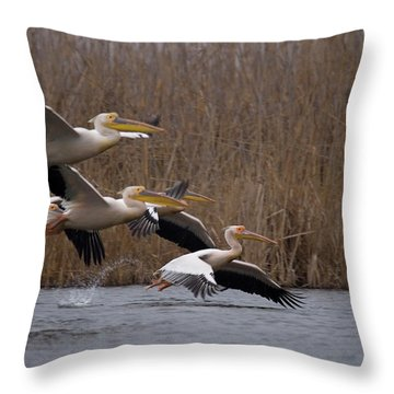 White Pelicans In Flight Over Lake Throw Pillow