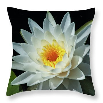 Throw Pillow featuring the photograph White Pond Lily by Arthur Dodd