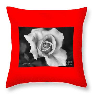 White Rose Against Black Throw Pillow