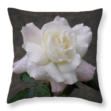 White Rose In Rain - 3 Throw Pillow