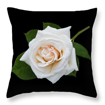 White Rose Throw Pillow by Jane McIlroy