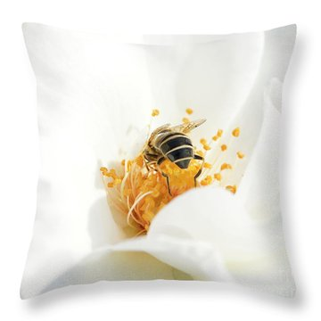 Looking For Gold In A White Rose Throw Pillow