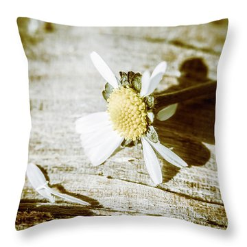 White Summer Daisy Denuded Of Its Petals Throw Pillow