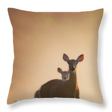 White-tailed Deer 2016 Throw Pillow