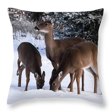 White-tailed Deer - 8855 Throw Pillow