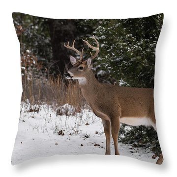 White-tailed Deer - 8904 Throw Pillow