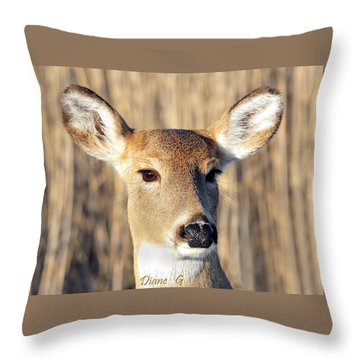 White-tailed Deer Throw Pillow by Diane Giurco