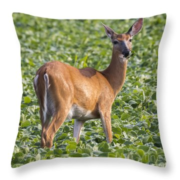 Throw Pillow featuring the photograph White-tailed Deer by Ricky L Jones