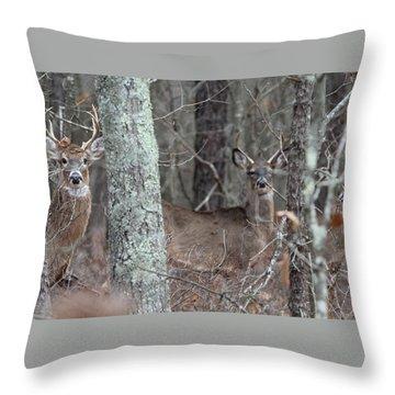 White Tailed Deer Smithtown New York Throw Pillow