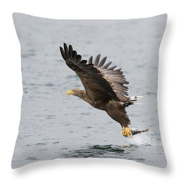 Throw Pillow featuring the photograph White-tailed Eagle Catching Dinner by Karen Van Der Zijden