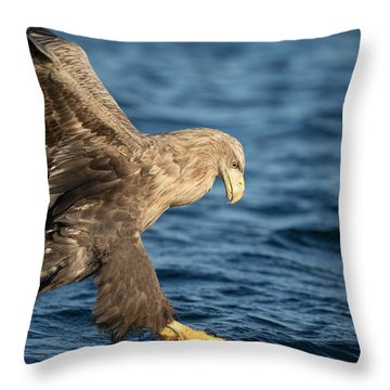 White-tailed Eagle Hunting Throw Pillow