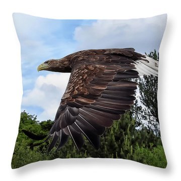 White Tailed Eagle Throw Pillow
