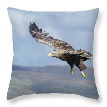 White-tailed Eagle On Mull Throw Pillow