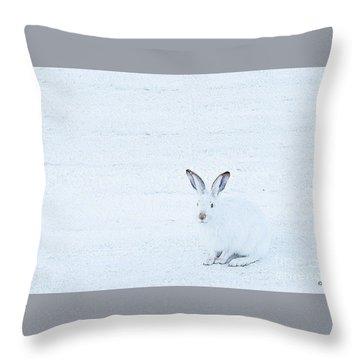 White-tailed Jack Rabbit  Throw Pillow