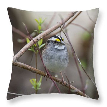 White Throat Throw Pillow