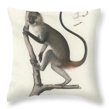 White Throated Guenon, Cercopithecus Albogularis Erythrarchus Throw Pillow