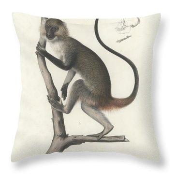 White Throated Guenon, Cercopithecus Albogularis Erythrarchus Throw Pillow