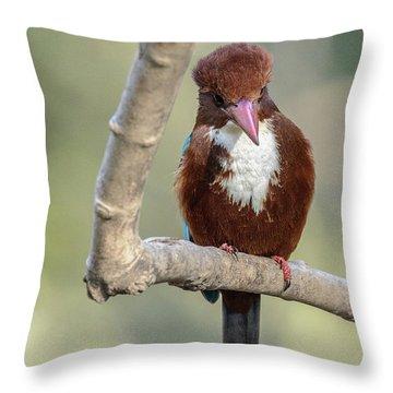 White-throated Kingfisher 01 Throw Pillow