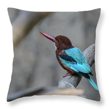 White-throated Kingfisher 02 Throw Pillow
