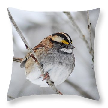 White Throated Sparrow Throw Pillow by Michael Peychich
