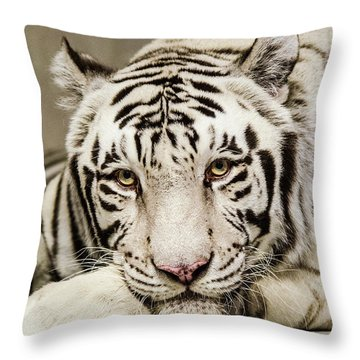 White Tiger Looking At You Throw Pillow