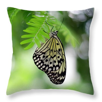 White Tree Nymph Butterfly 2 Throw Pillow