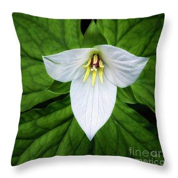 white trillium along Laurel Creek Road Throw Pillow by Madonna Martin