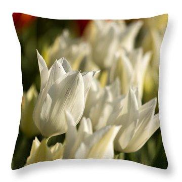 White Triumphator Throw Pillow