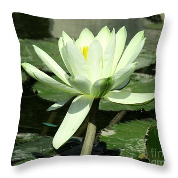 Throw Pillow featuring the photograph White Water Lily 1 by Randall Weidner