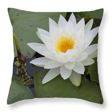 White Waterlily Throw Pillow by Linda Geiger