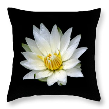 Throw Pillow featuring the photograph White Waterlily With Dewdrops by Rose Santuci-Sofranko