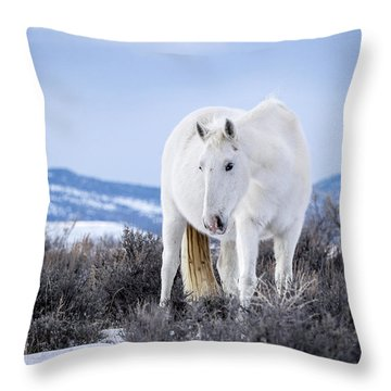 White Wild Horse Mystic Of Sand Wash Basin Throw Pillow